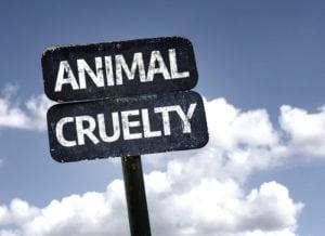 animal cruelty above and beyond dog training